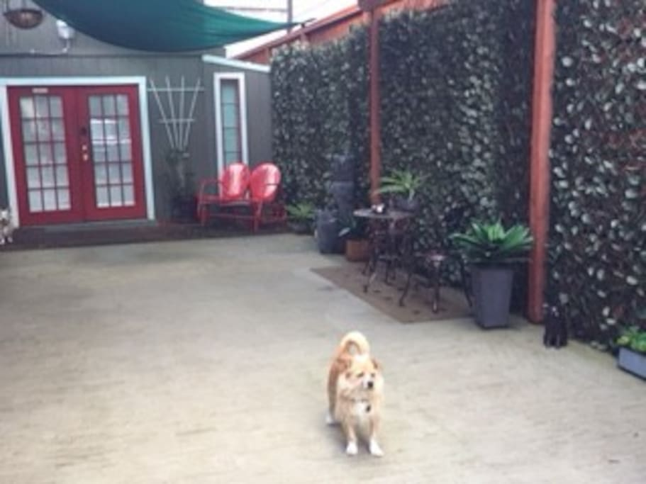 Chewy shows off the patio
