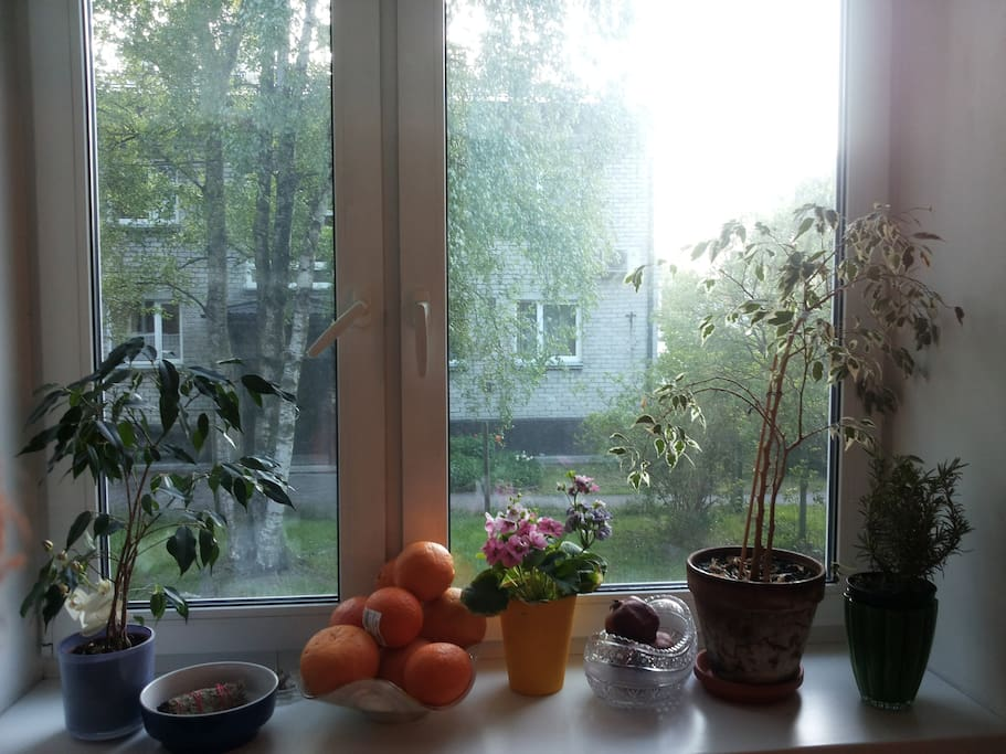The view out the window in the kitchen