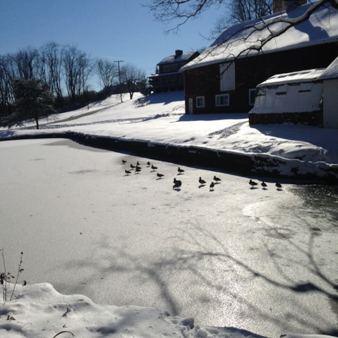Duck pond on property.  Fishing good.