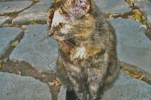 Cleo the Grumpy Cat