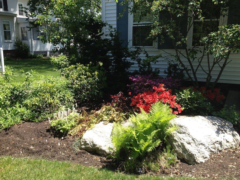 front of house garden in bloom
