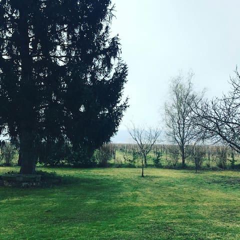 Entre vigne et vue sur le fleuve de Dordogne - Saint-Jean-de-Blaignac - Haus
