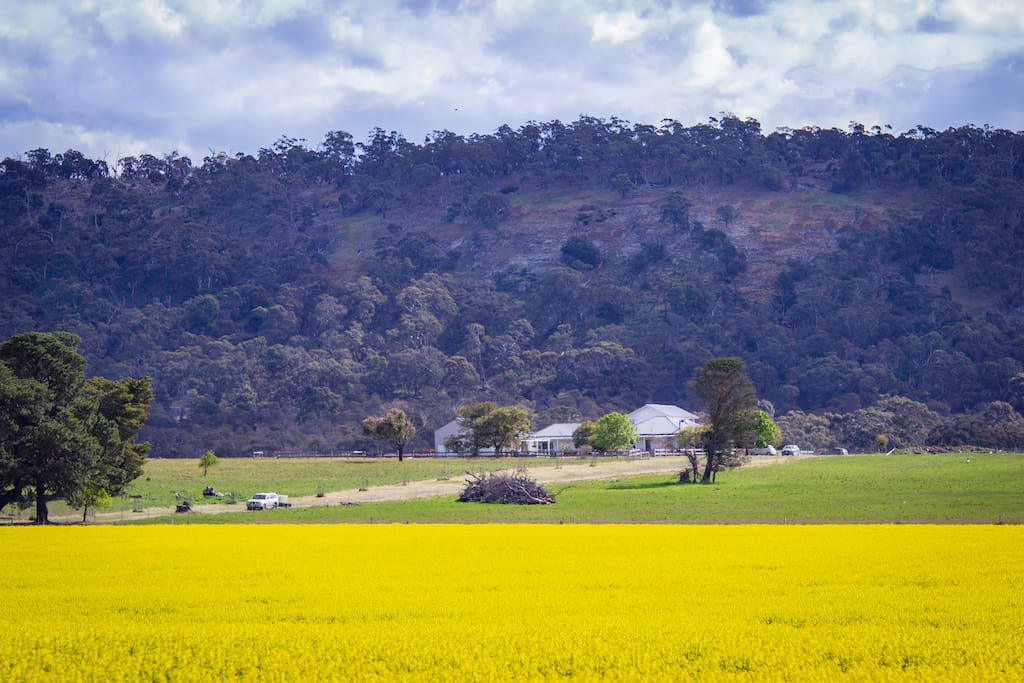 Beckworth Scenic Reserve is right on our boundary and a great place for walks / drives.