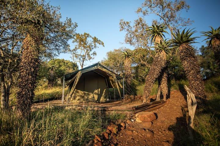 Big Five Tented Camp