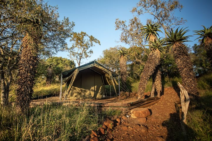 Big Five Tented Camp