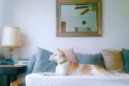Urban Loft Pet Friendly Escape - Charleston
