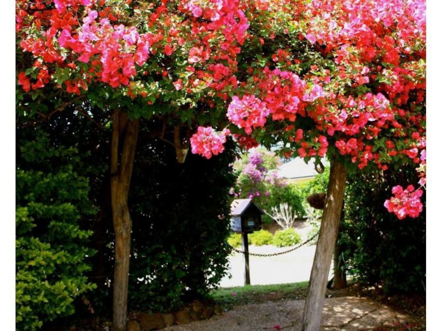 Beautiful bougainvillea at the front of the property
