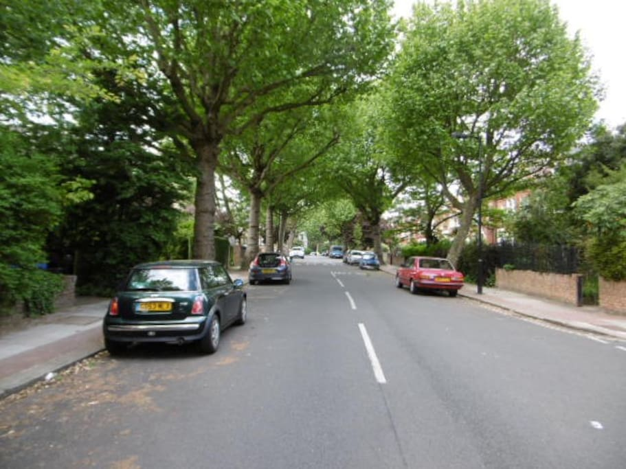 Our tree-lined road