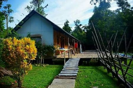 Back To The Basic. Borneo Rainforest Nature Stay