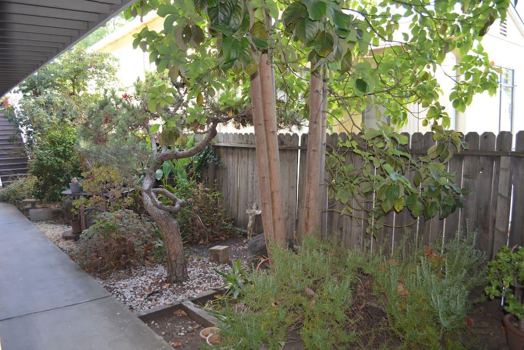 quaint garden at front of apartment