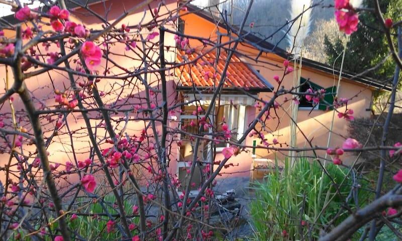 casa vacanze la Castagnara - Rotonda - House