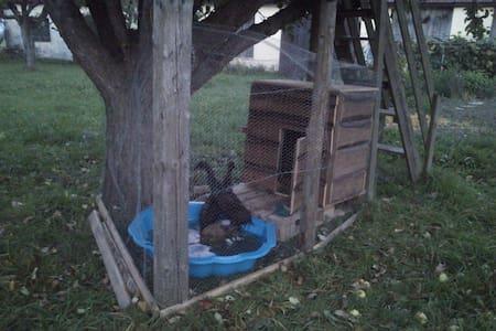 Waldviertler Wohnung im Vierkanthof - Brunn an der Wild