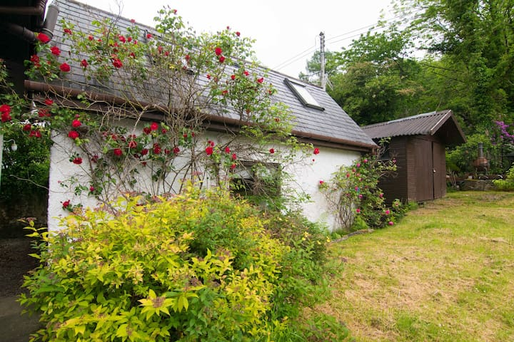 Beautiful roses growing around the Bunkie in summer