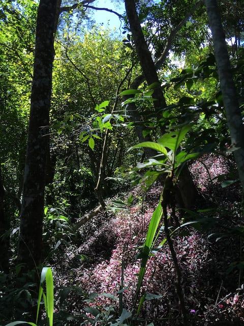 Casa de Campo em Macacos