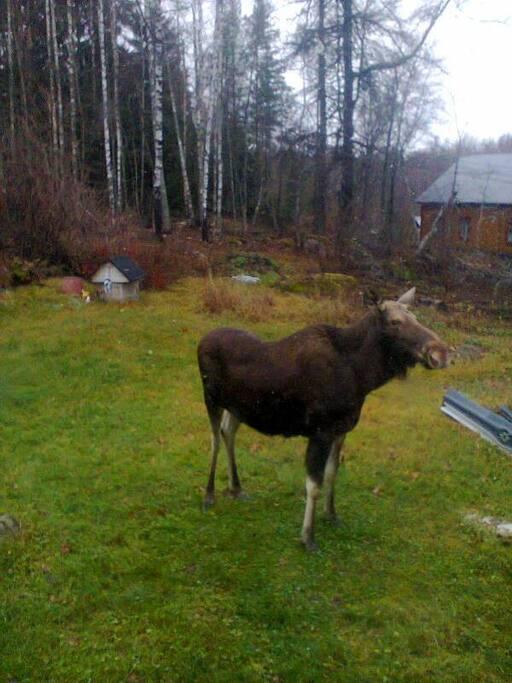Tämä kaveri tuli seuraksi aamiaiselle.