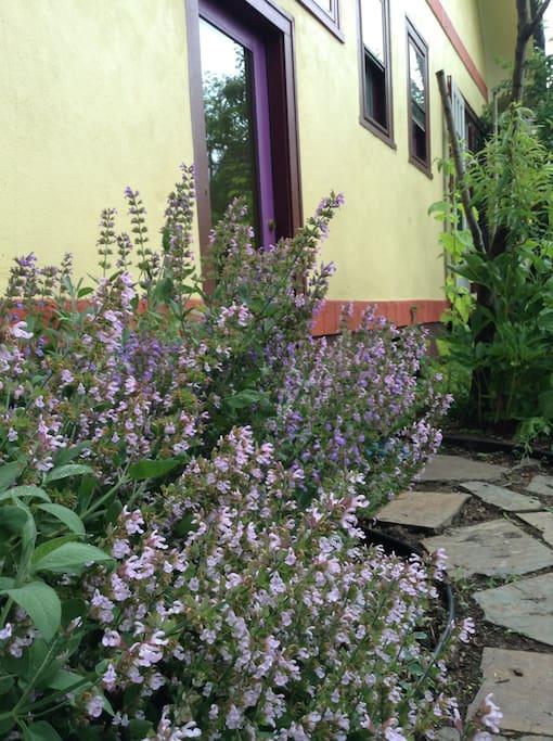 Back entrance past herb gardens