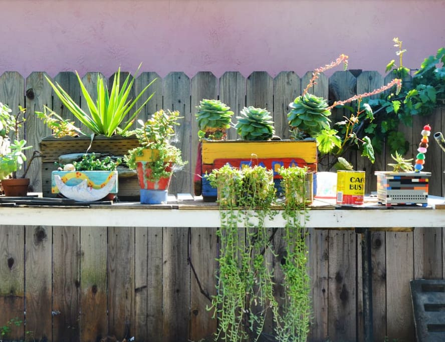 outdoor collection of plants
