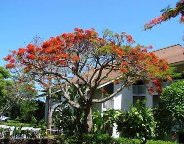 Poipu Beach-2BR,2BA-FREE WIFI, Tennis, Fitness Ctr - Poipu - Condominium