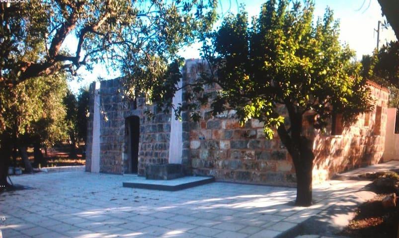 Pajara Fiorelli