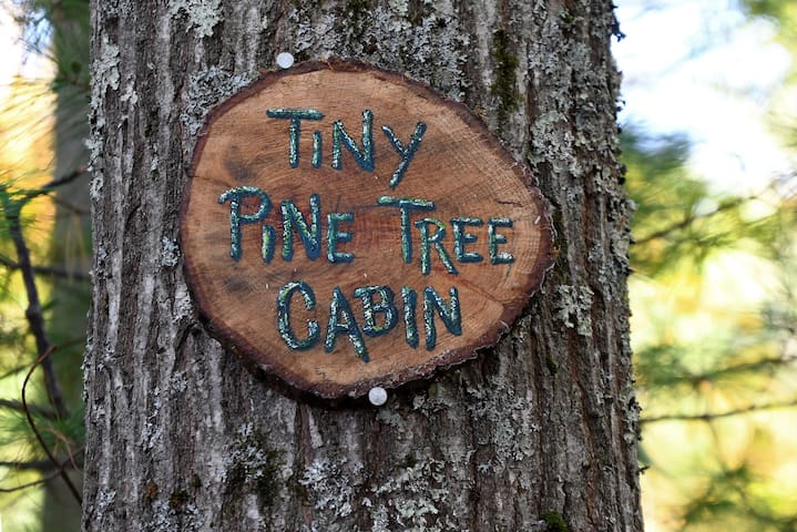 Tiny Pine Tree Cabin