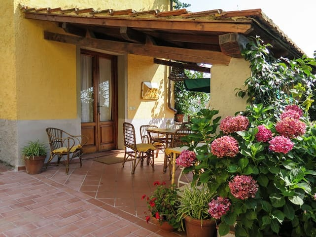 Country house in beautiful olive grove in Tuscany - Uzzano - Apartment