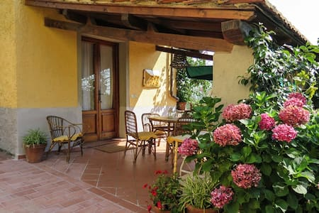 Country house in beautiful olive grove in Tuscany - Uzzano - Apartmen