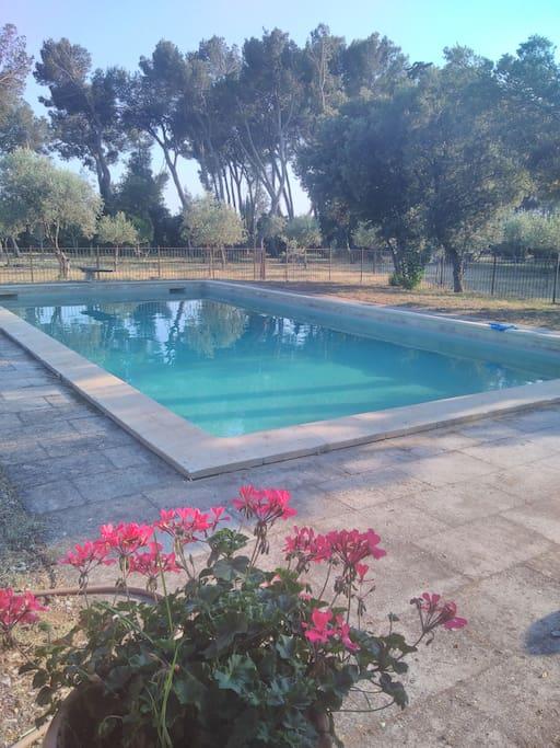 piscine vue n°1