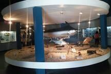 Visite o Museo Oceanográfico