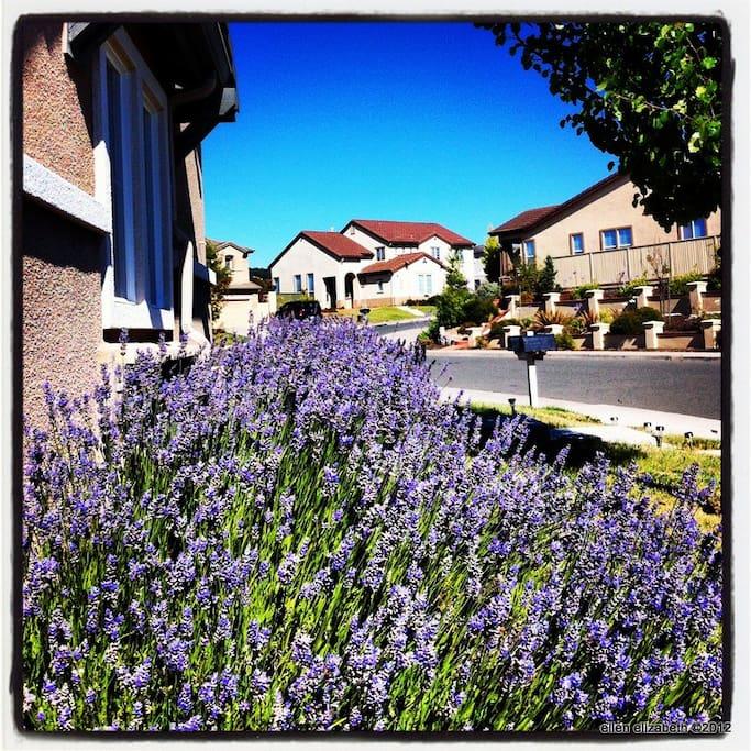 The front yard & neighborhood