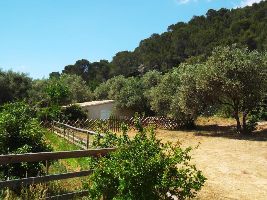 le parking à côte de la maison sous les oliviers