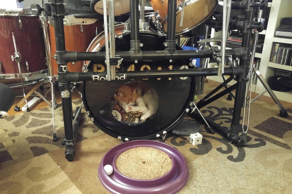 Living room with kitty mattress in the drum.