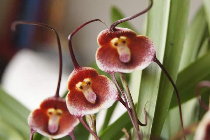 Orquídeario