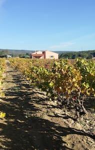 Gîte au calme au milieu des vignes - Le Castellet