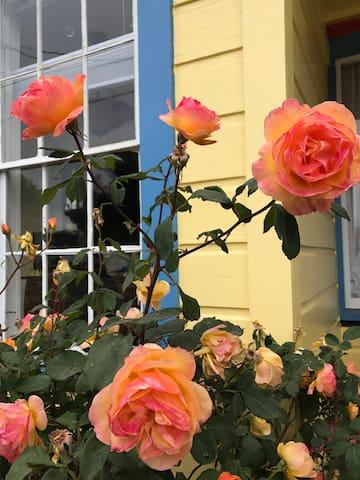 Redwood Rose Retreat Home & Gardens