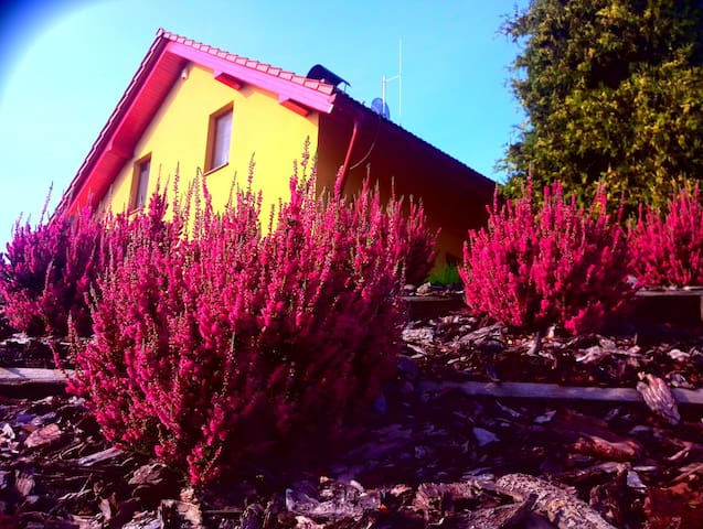 Discover the beautiful countryside (B&B) - Bludov - Talo