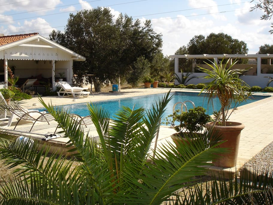 Swimming pool next to olive grove