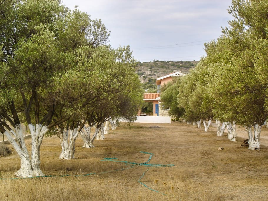 Surrounded by 108 olive trees.