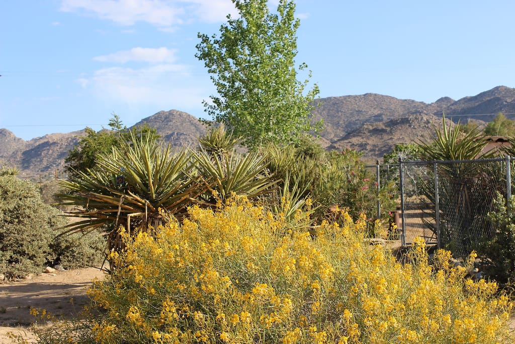 Joshua Tree National Park entrance is 5 minutes up the street.  Hidden Valley Campground is a short 15 minute drive.