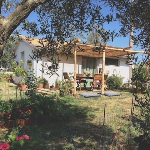 "B&B ""Tra gli ulivi"" - Montefiascone - Bed & Breakfast"