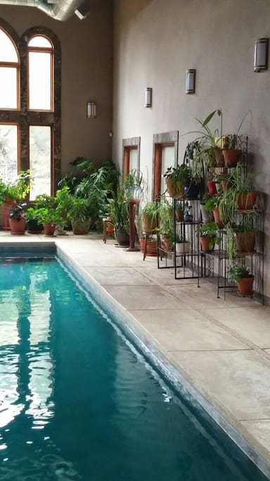 Plants loving the pool room - you will too!