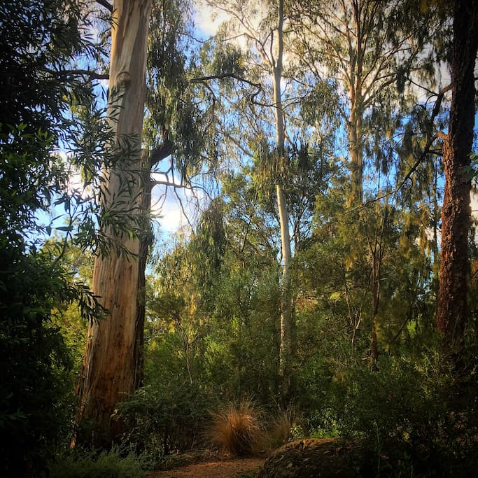 Surrounded by eucalyptus.