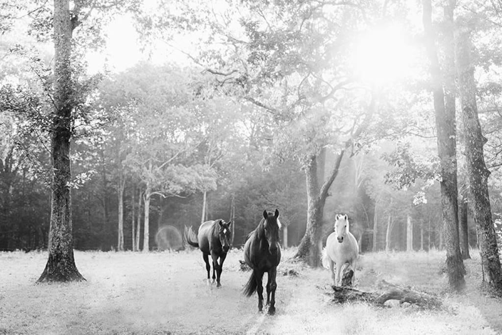 Cedar Springs is a photographer's dream and a great wedding spot!