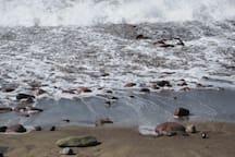 Undertow - Turas beach. inhale