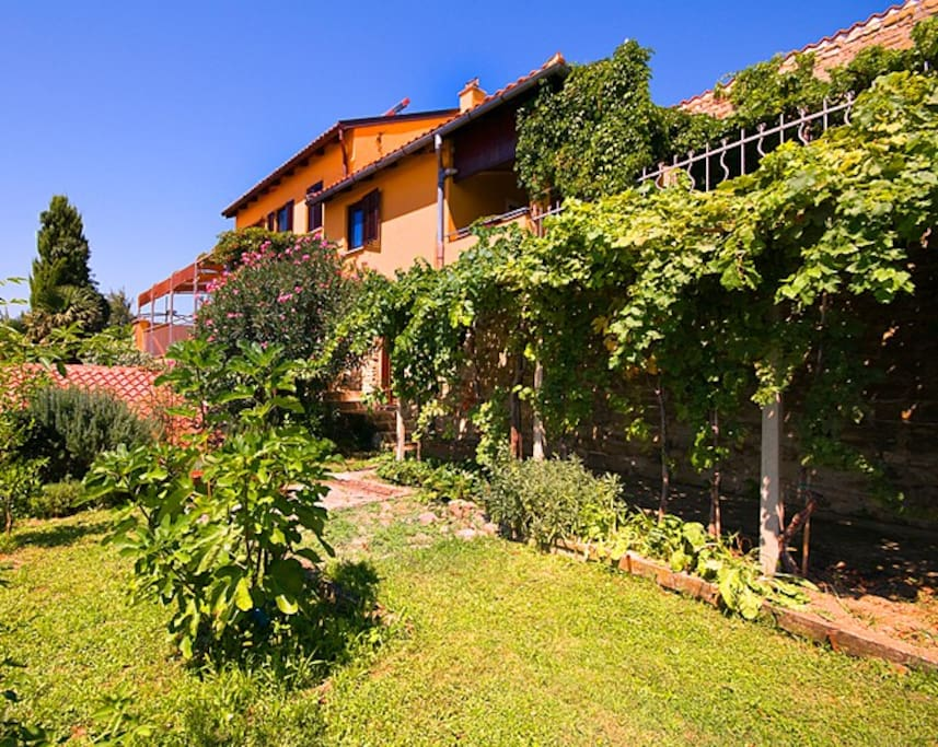Garden around the house - down terrace with wineyard
