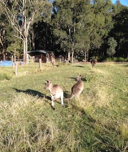 Emu Farm Farmstay Fully S/C cabin - Falls Creek - Cabane