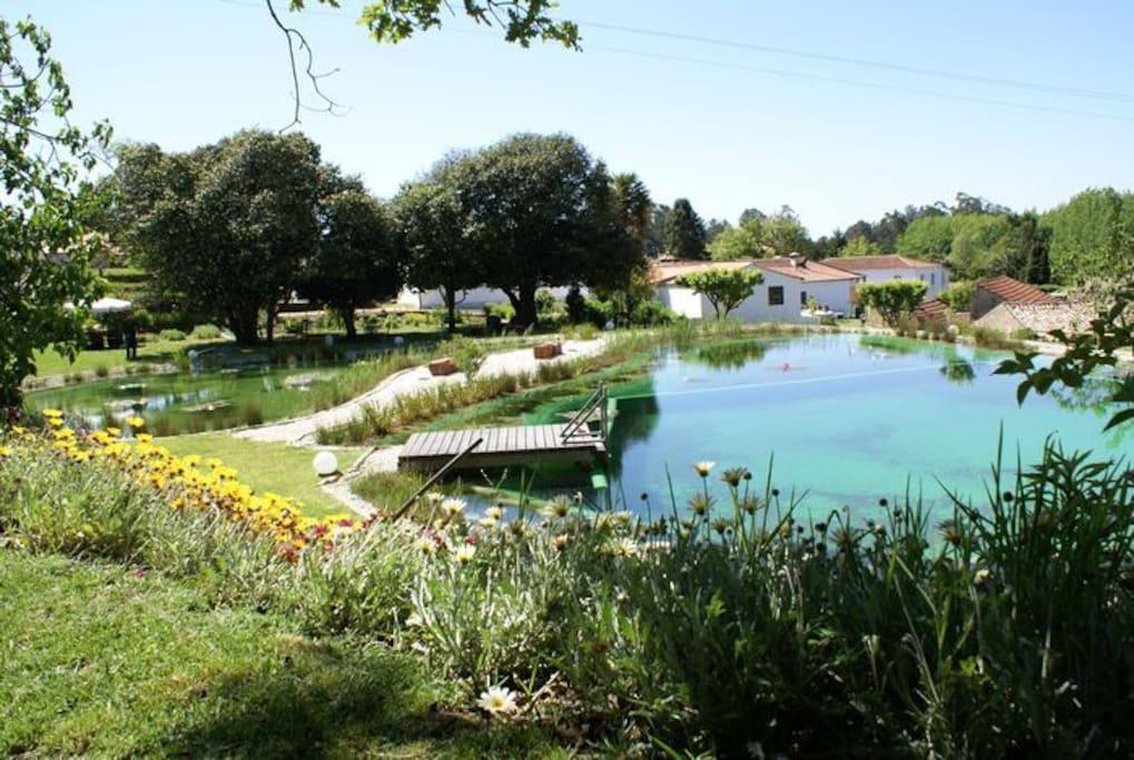 Biologic swimming pool and lake