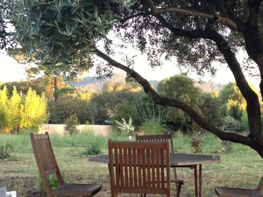 ... et manger au frais sous l'olivier ...