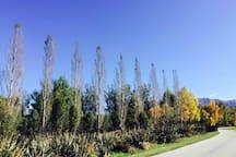 Threepwood Road