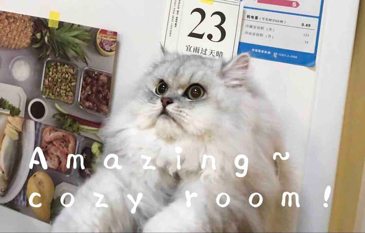 Cozy Room治愈屋 | 愚园路中山公园 | 四条地铁线贯穿上海 | 直达机场南京东路迪士尼外滩