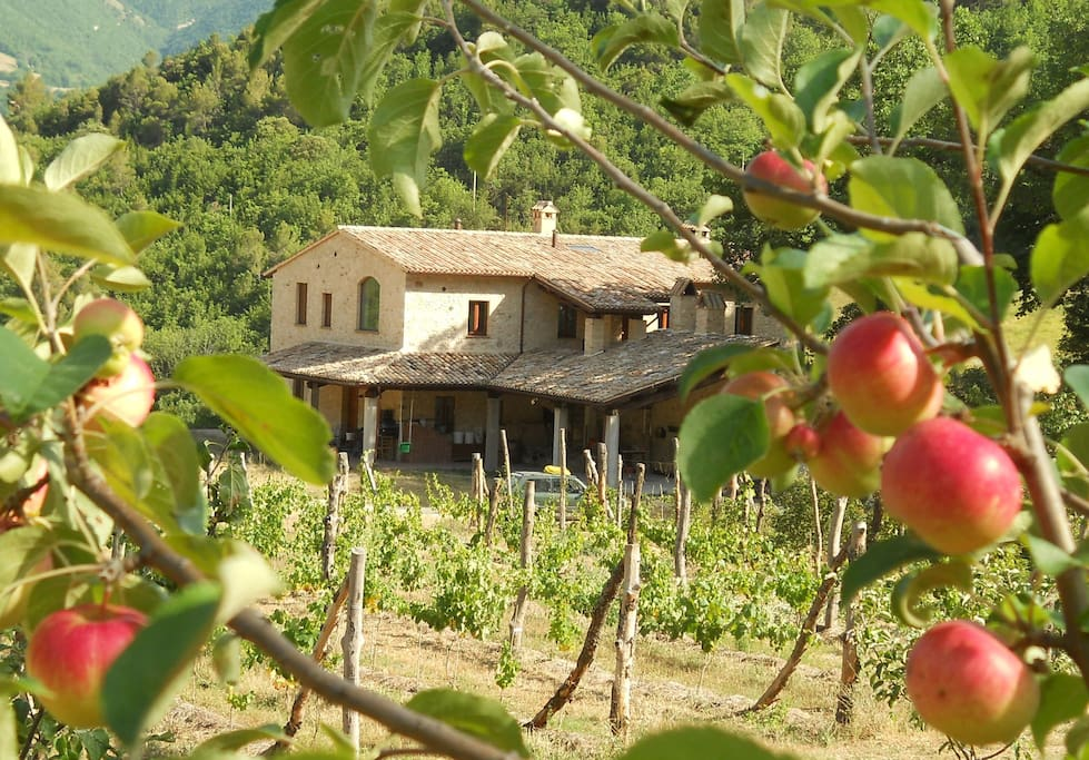 Localita il Piano farmhouse, as seen from the apple orchard to the north